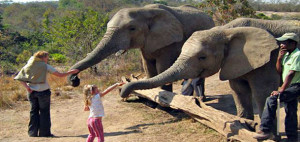 1-elephant-interaction-590